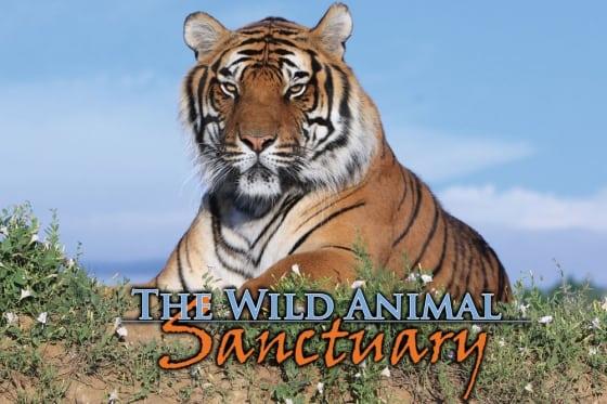 The Wild Animal Sanctuary in Colorado